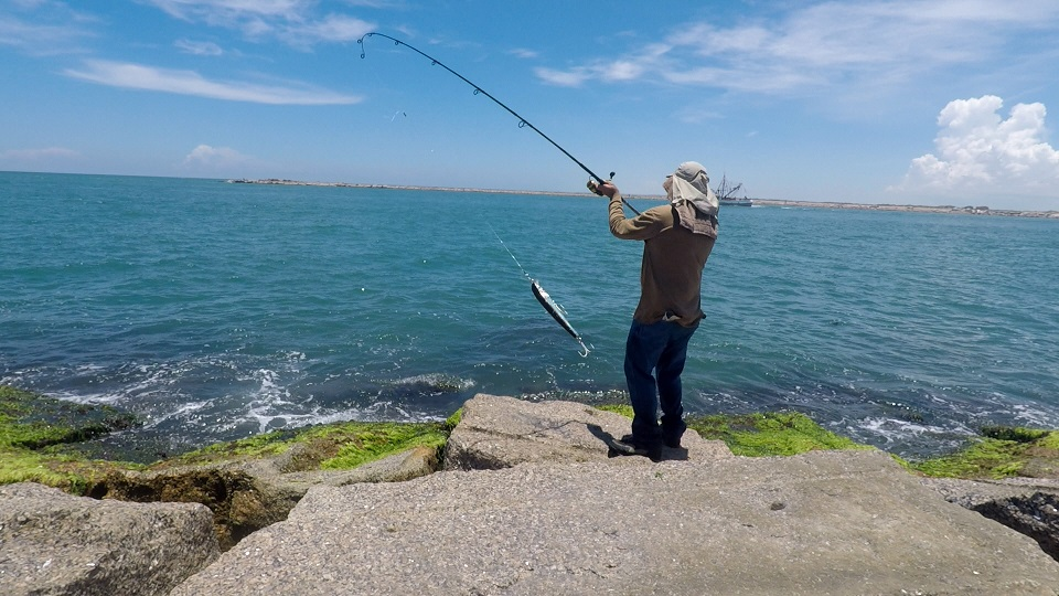 South texas kingfish report open saltwater discussion for Texas saltwater fishing report