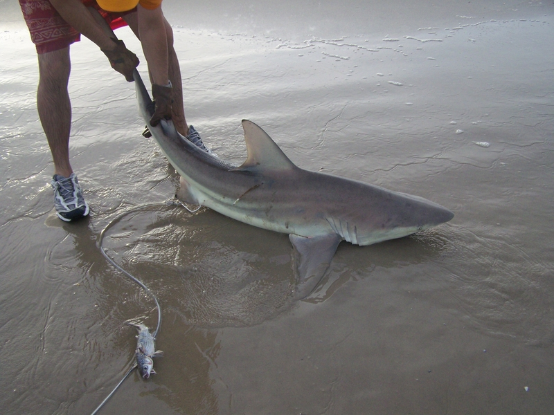 fishing reports texas shark fishing