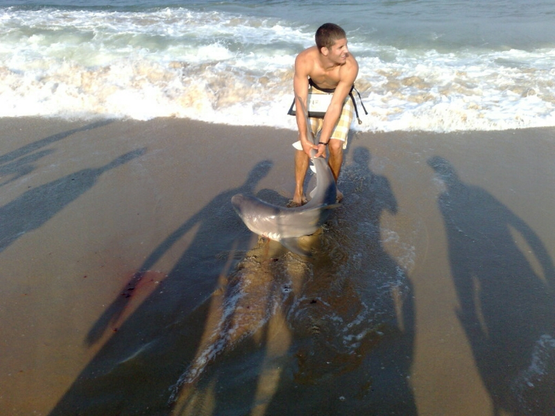 Bethany beach delaware sharkweek report w lots of pics for De fishing report