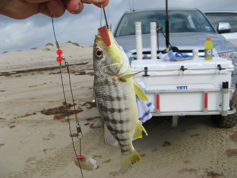 Butter perch for South padre island fishing