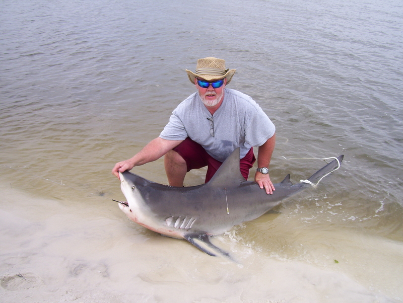 First ever florida shark fishing report florida shark for Shark fishing in florida