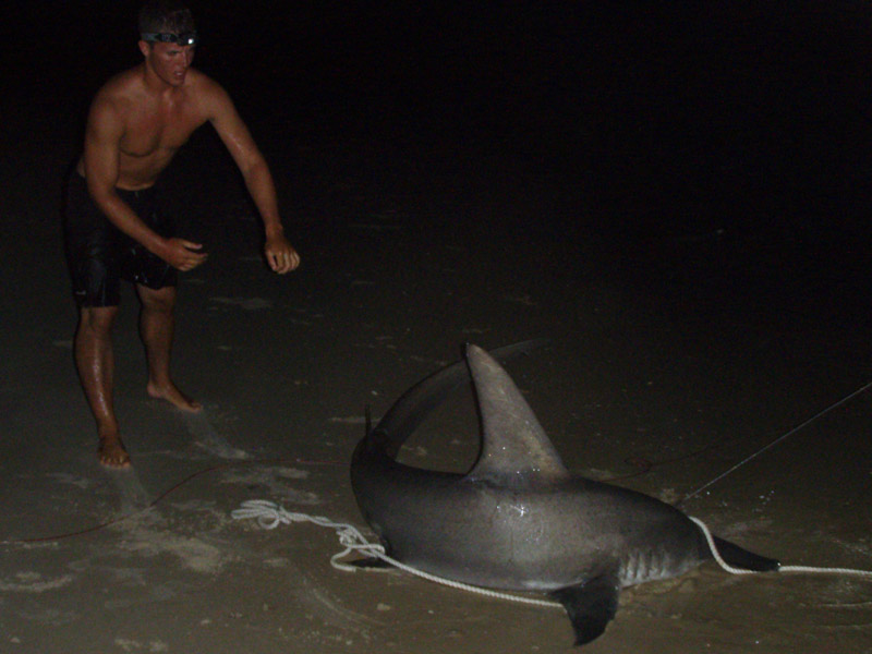 how to catch big sharks from the beach