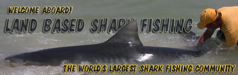 shark fishing banner